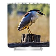 Black-crowned Night Heron Shower Curtain