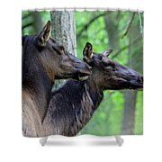 Elk In The Forest  Shower Curtain