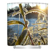 Frost On Willow At Sunrise Shower Curtain
