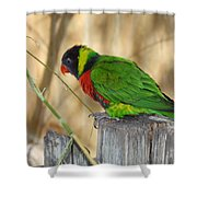 Lorikeet Parrot Sitting On A Fence Post  Shower Curtain