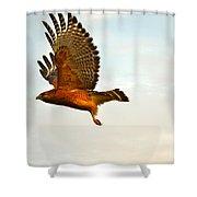 Majestic Red Shoulder Hawk Shower Curtain