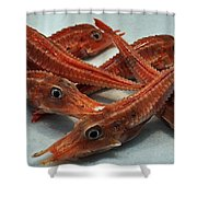 Red Cherry Shrimp In The Market Shower Curtain