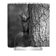 Red Squirrel In Bw Shower Curtain