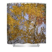 Reflecting Cedar Shower Curtain