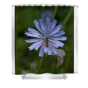 Spring Flower And Hoverfly Shower Curtain