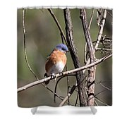 Sucarnoochee River - Bluebird Shower Curtain