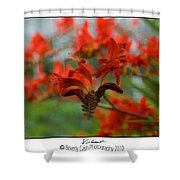 Vibrant Abstract Shower Curtain