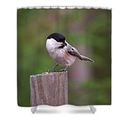 Willow Tit With Seeds Shower Curtain