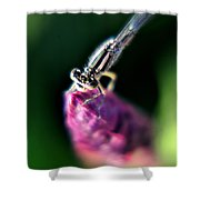0001 Dragonfly On A Salvia Burgundy Candle Shower Curtain