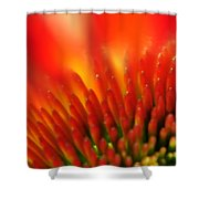 0001 Echinacea Pow Wow Sunrise Shower Curtain