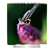 0002 Dragonfly On A Salvia Burgundy Candle Shower Curtain