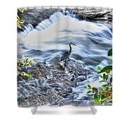 0005 Blue Heron At Glen Falls Williamsville Ny Shower Curtain