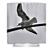 001 Gull To Out Do Wallenda Shower Curtain
