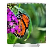 001 Making Things New Via The Butterfly Series Shower Curtain