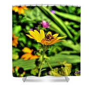 002 Busy Bee Series Shower Curtain