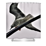 002 Gull To Out Do Wallenda Shower Curtain