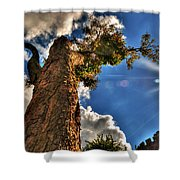 002 Reaching For The Sky Shower Curtain