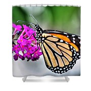 004 Making Things New Via The Butterfly Series Shower Curtain