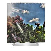007 Summer Sunrise Series Shower Curtain