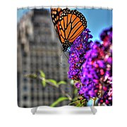 008 Making Things New Via The Butterfly Series Shower Curtain