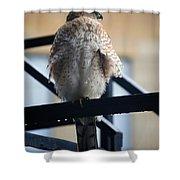 01 Falcon  Shower Curtain