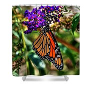 011 Making Things New Via The Butterfly Series Shower Curtain