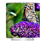 012 Making Things New Via The Butterfly Series Shower Curtain