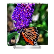 015 Making Things New Via The Butterfly Series Shower Curtain