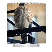 03 Falcon Shower Curtain