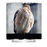 04 Falcon Shower Curtain