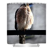 05 Falcon Shower Curtain