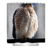 06 Falcon Shower Curtain