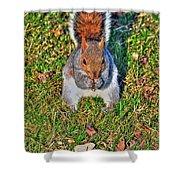06 Grey Squirrel Sciurus Carolinensis Series Shower Curtain