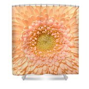 0625.2.c3 Shower Curtain