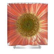 0626a1 Shower Curtain