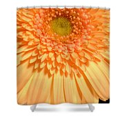 0627c3 Shower Curtain