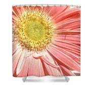 0628a-002 Shower Curtain