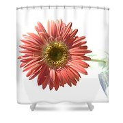 0651a Shower Curtain