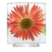 0654a-5 Shower Curtain