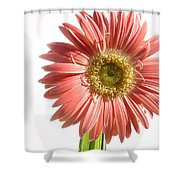0664a1-5 Shower Curtain
