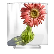 0666a1-1 Shower Curtain