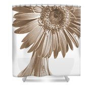 0666a1-5 Shower Curtain