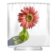 0666a1 Shower Curtain