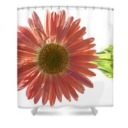 0681a Shower Curtain