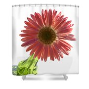 0685a2 Shower Curtain