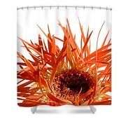 0687c-019 Shower Curtain