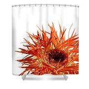 0687c-020 Shower Curtain