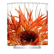 0687c-024 Shower Curtain