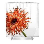 0688c-001 Shower Curtain