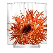 0688c-003 Shower Curtain